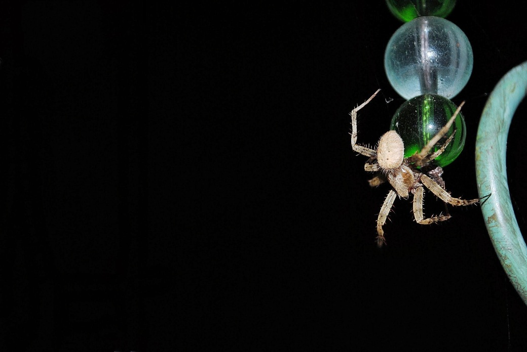 spider-1508-rev